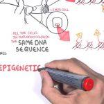 L'épigénétique, qu'est-ce que c'est ? Et pourquoi la méthylation est-elle primordiale?